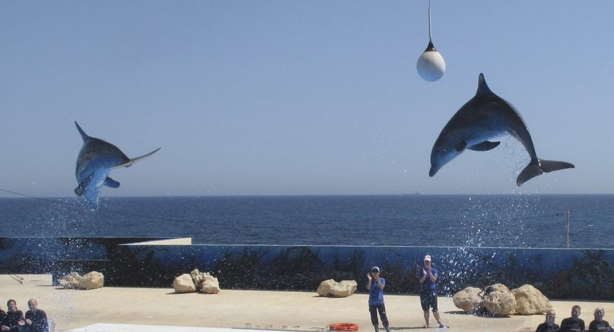 פארק דולפינים מלטה